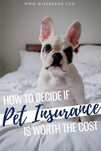 With pet insurance covering some costs of veterinary care, you're never forced to choose between your beloved pet and your finances.Here's what you need to know about pet insurance.   #pets #petcare #insurance